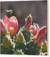 Bee On Cactus In Croatia Wood Print