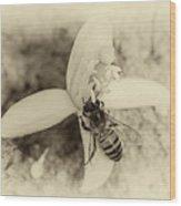 Bee On Citrus Flower Wood Print