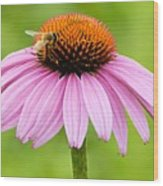 Bee On Cone Flower Wood Print