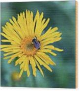 Bee On Curlyhead Goldenweed Wood Print