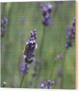 Bee on Deep Purple Lavender Spike Wood Print