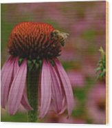 Bee On Echinacea Wood Print