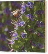 Bee On Echium Wood Print