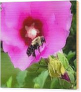 Bee On Edge Of A Hibiscus Flower Wood Print