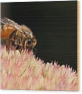 Bee On Flower 2 Wood Print