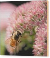 Bee On Flower 3 Wood Print