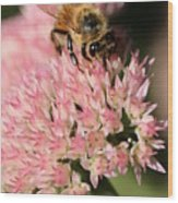 Bee On Flower 4 Wood Print