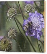 Bee On Flower 4. Wood Print