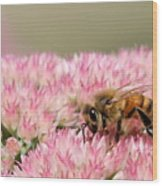 Bee On Flower 5 Wood Print