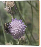 Bee On Flower 5. Wood Print