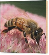 Bee On Flower 6 Wood Print