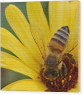 Bee On Flower Wood Print