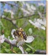 Bee On Flower On Tree Branch Wood Print
