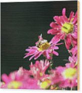 Bee On Flower Spring Scene Wood Print