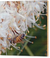Bee On Flowers 1 Wood Print
