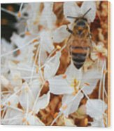 Bee On Flowers 2 Wood Print