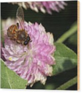 Bee On Gomphrena Wood Print