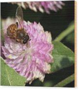 Bee On Gomphrena Wood Print