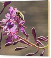 Bee On Lupine Wood Print