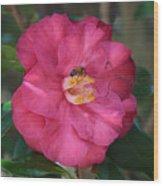 Bee On Pink Camellia Wood Print