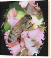 Bee On Pink Flower With Swirly Framing Wood Print
