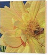 Bee On Pretty Dahlia By Kaye Menner Wood Print