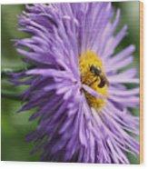 Bee On Purple Daisy Wood Print