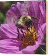 Bee On Purple Flower Wood Print