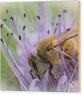 Bee On Purple Wood Print