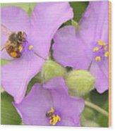 Bee On Purple Spiderwort Wood Print