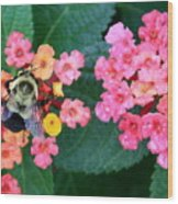 Bee On Rainy Flowers Wood Print