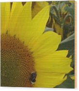 Bee On Sunflower 1 Wood Print