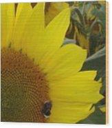 Bee On Sunflower 1 Wood Print
