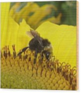 Bee On Sunflower 2 Wood Print