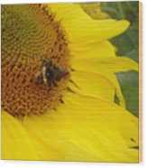 Bee On Sunflower 3 Wood Print