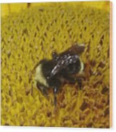 Bee On Sunflower 4 Wood Print