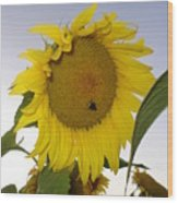 Bee On Sunflower 5 Wood Print