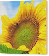 Bee On Sunflower Wood Print