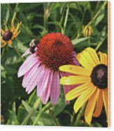Bee On The Cone Flower Wood Print