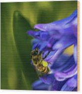 Bee On The Hyacinth Wood Print