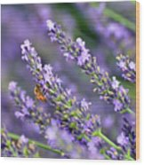 Bee On The Lavender Wood Print