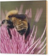 Bee On Thistle 102 Wood Print by Diane Backs-Mancuso