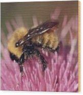 Bee On Thistle 103 Wood Print