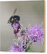 Bee On Thistle Wood Print