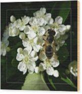 Bee On White Flowers 2 Wood Print