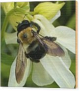 Bee On White Wood Print