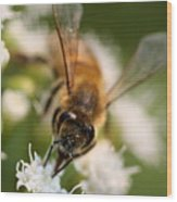 Bee On White Vertical Wood Print