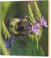 Bee On Wildflower Wood Print