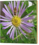 Bee On Wildflower Wood Print