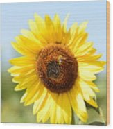 Bee On Yellow Sunflower Wood Print